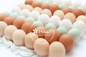 Chụp ảnh Catalogue công ty trứng gà DABACO