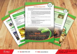 Thiết kế tờ rơi GVA