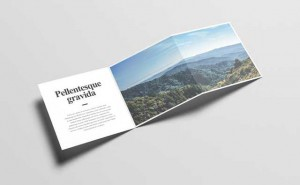 z-fold-brochure